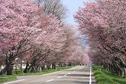 優駿の里浦河桜まつり