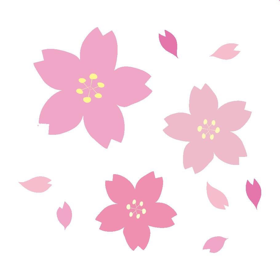 優駿さくらロード開花状況はFacebookで随時発信中です。