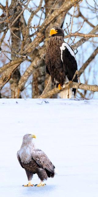 eagle_photo