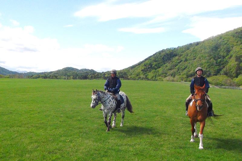 広大な草原で優雅な乗馬を