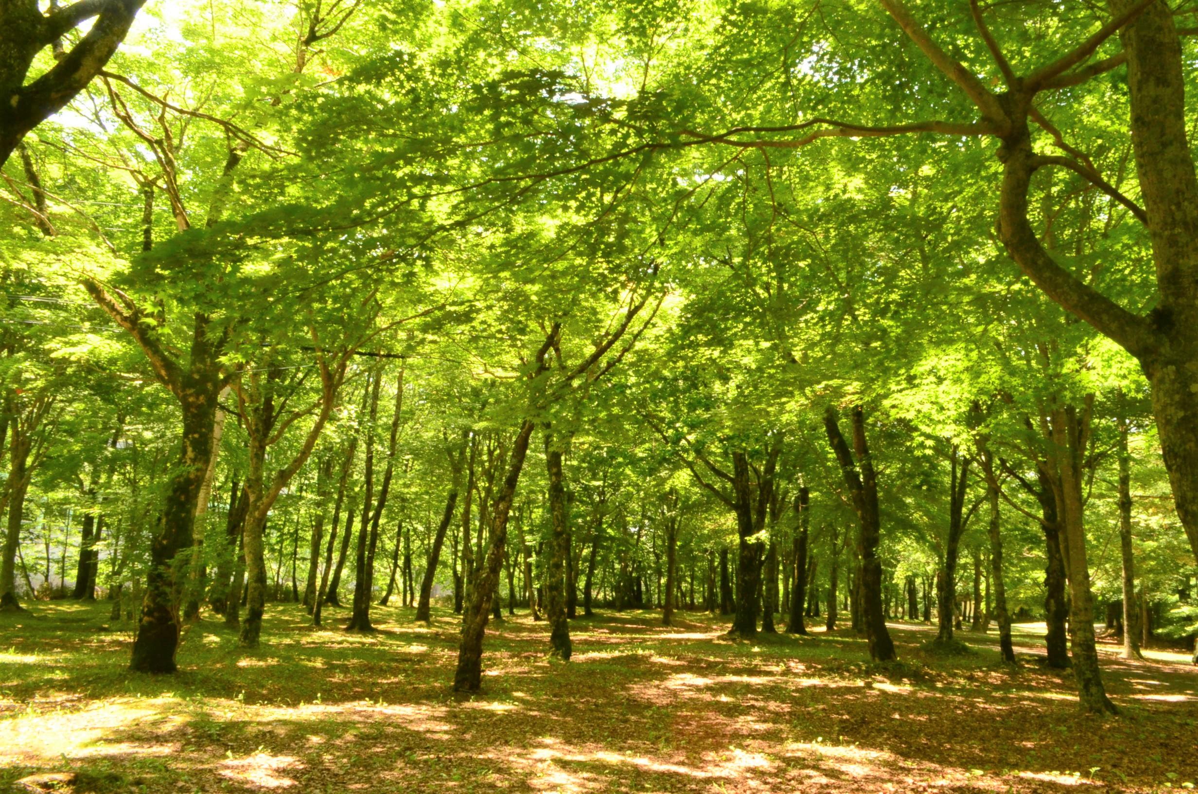 木々が木洩れ日を作ります。