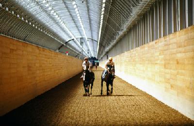 軽種馬の育成調教施設