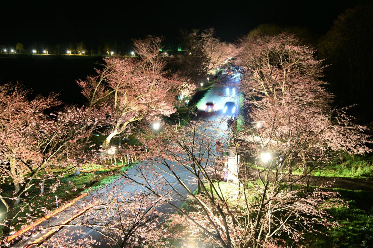 「桜のトンネルライトアップ」5月9日(木)まで延長いたします。